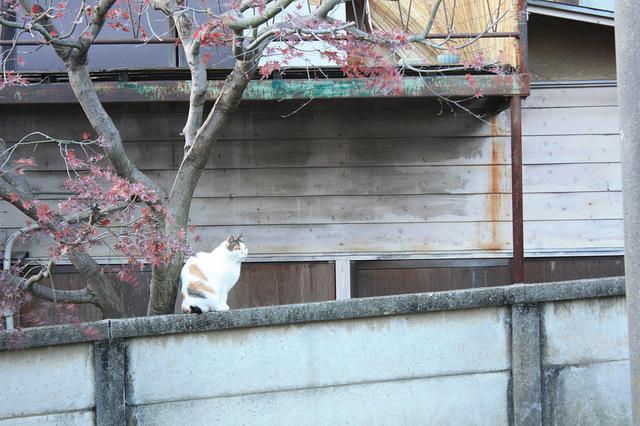 201012gotokuji06