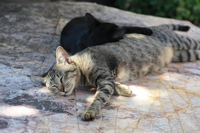 Avec la chaleur, on avait aussi envie de dormir à l'ombre. 暑かった。私たちも日陰でお昼寝したかった。