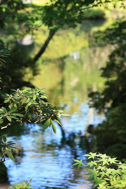 Dans le parc de temple Rinnoji. Je reviendrai bien en automne mais on sera pas aussi au calme…